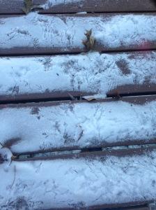 Bird Tracks in Snow