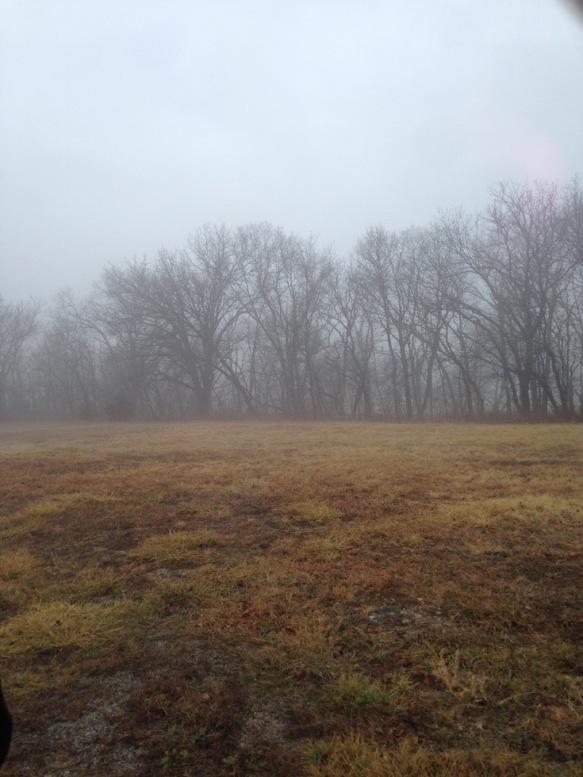 foggytrees