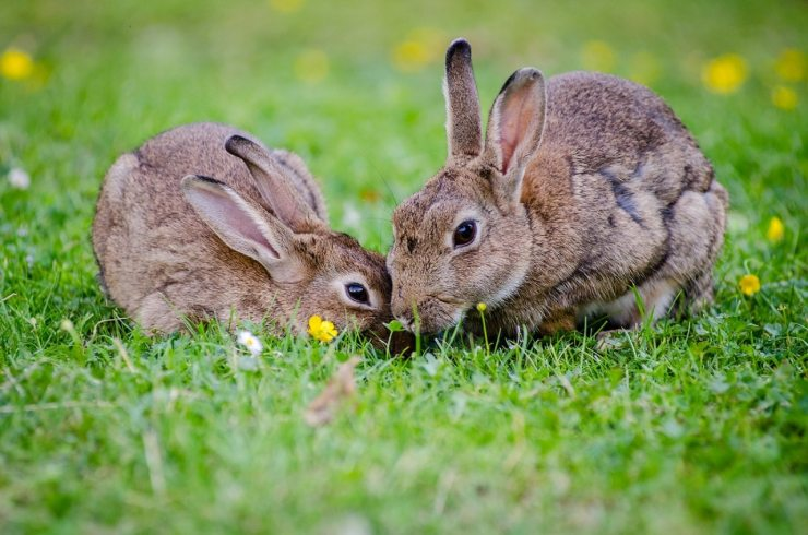 animals-bunnies-bunny-33152
