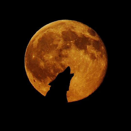 WolfMoon2IG