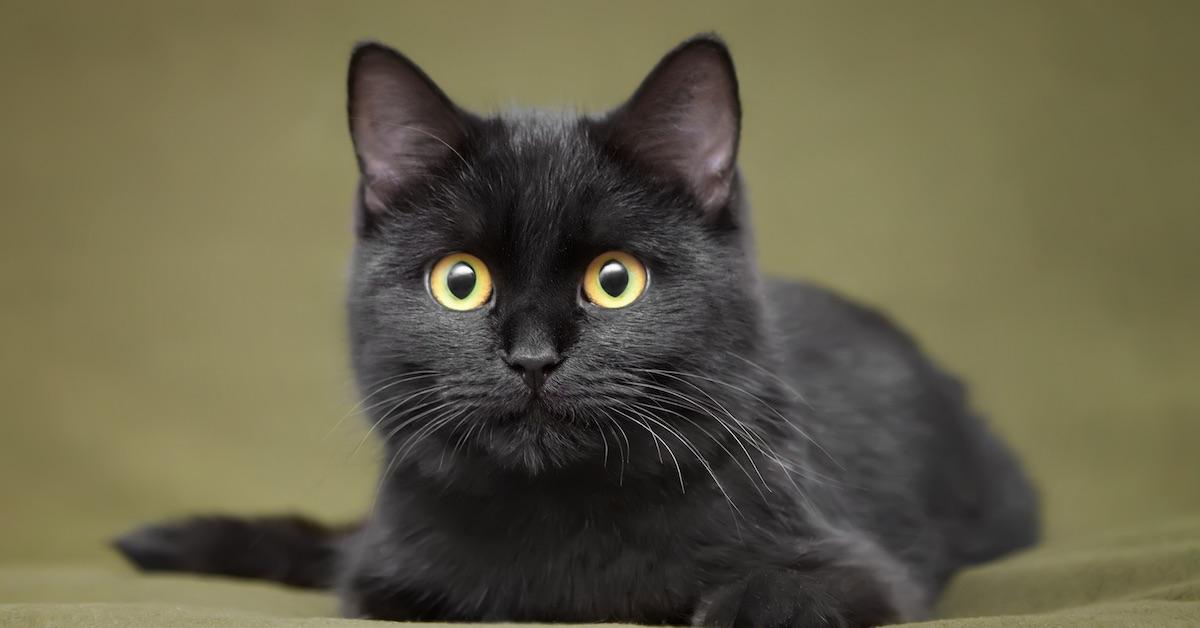 Black_Cat1LS