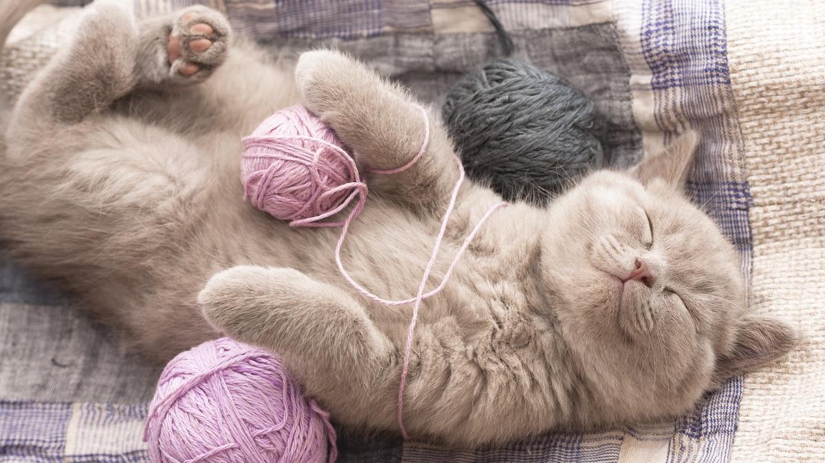 Sleepy_Cat_Kitten1LS